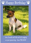 "Jack Russell Terrier-Happy Birthday - ""From The Dog"" Theme"